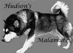 Hudsons Malamutes - my breeder of choice