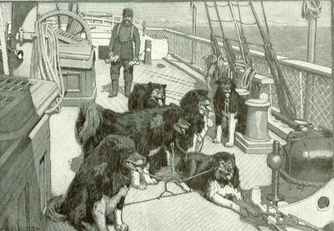 The survivors of the dog team that dragged the rescue party twenty-four hundred miles