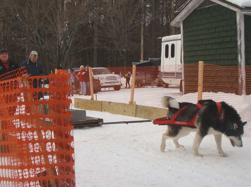 Canine Snow Weight Pull
