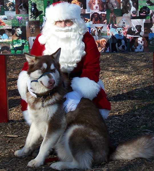 Cinnabar with Santa - 2006
