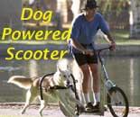 DogPoweredScooter.com - Urban Mushing