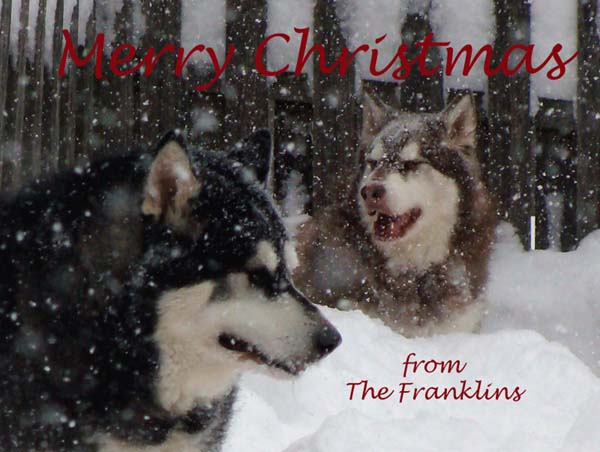 Merry Christmas from The Franklins 2011