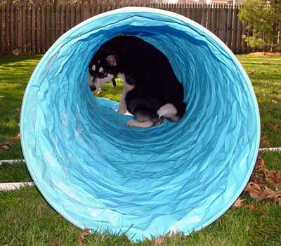Sebastian in his tunnel November 2004