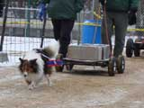 IWPA - Canine Weight Pull